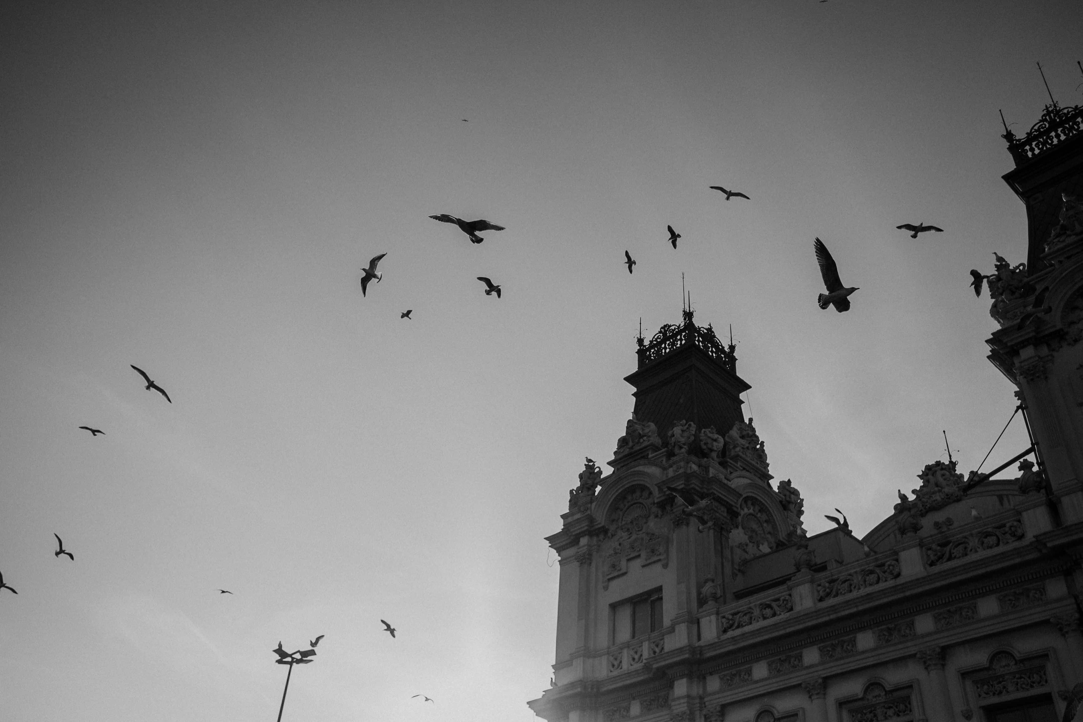 Black and white of birds flying overhead in Barcelona