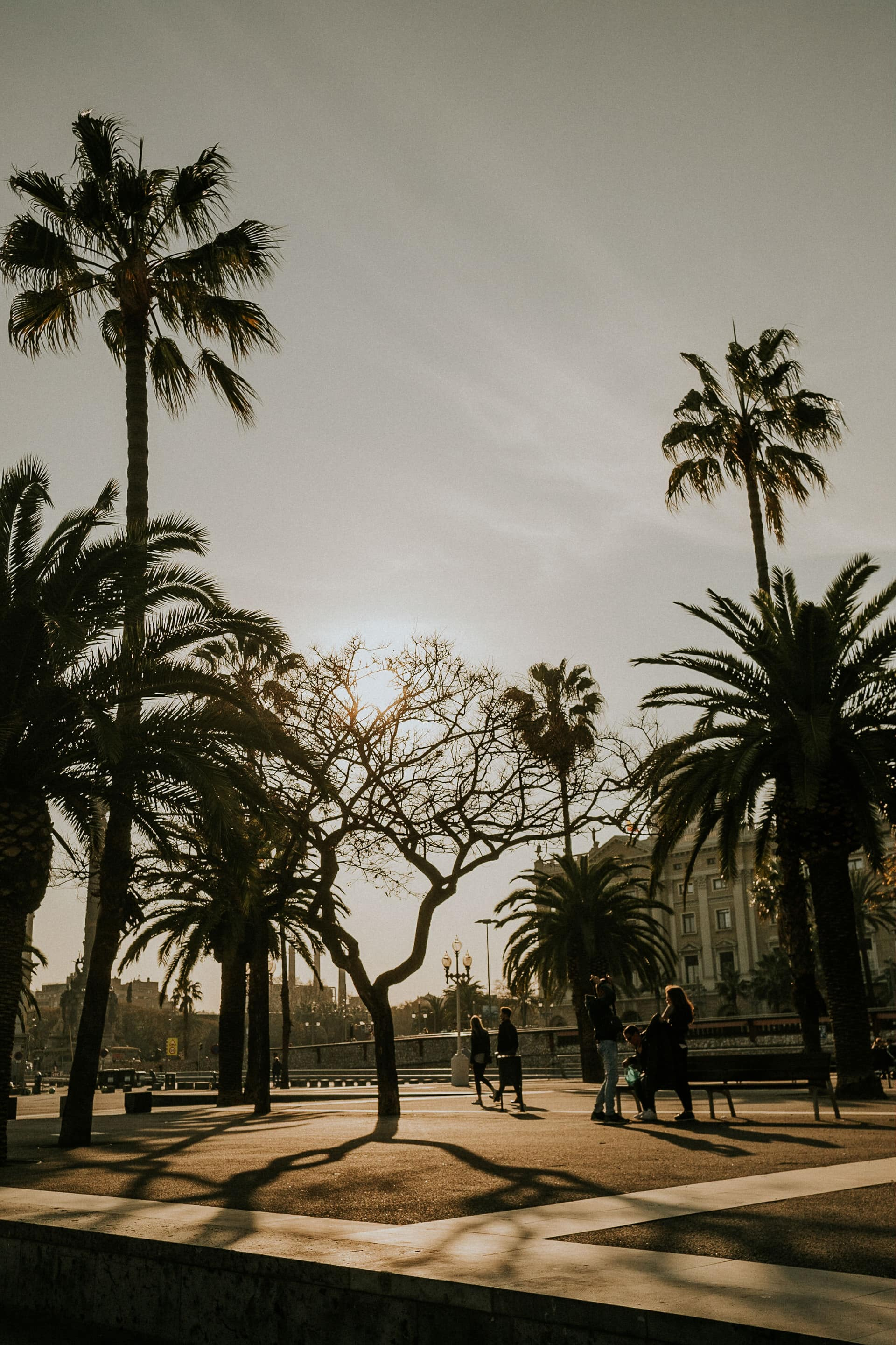 Sun through the trees in Barcelona